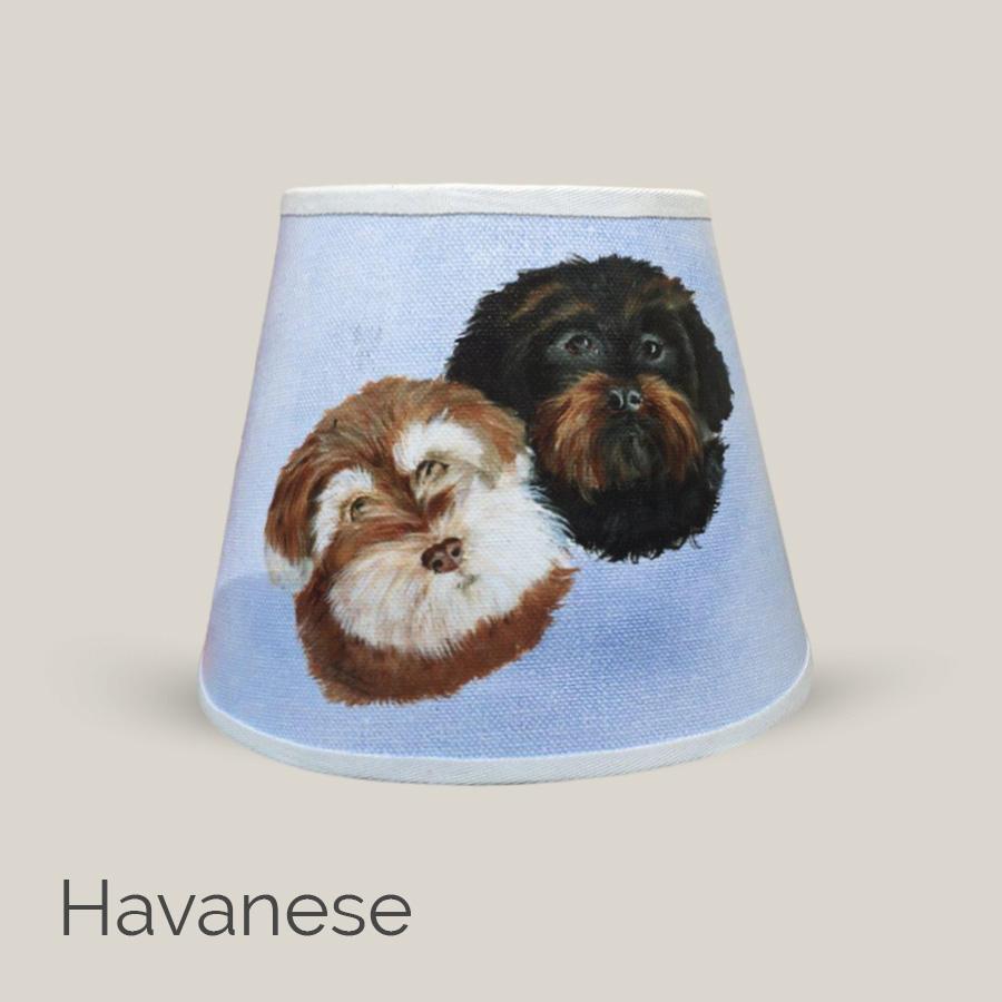 Havanese